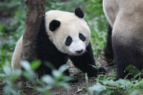 Neues über Tian Bao