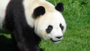 Besuch im ZooParc de Beauval