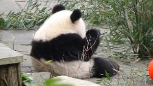 panda-kind1