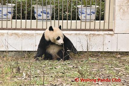 Tian Bao News
