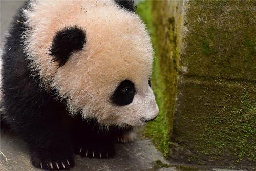 Fei Li – Update