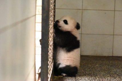 Update: Fei Li