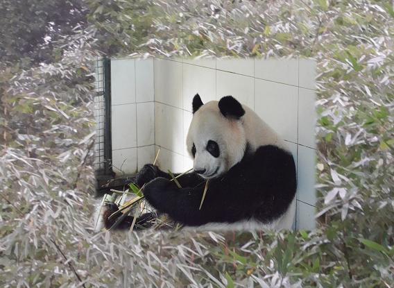 News: Yang Hua