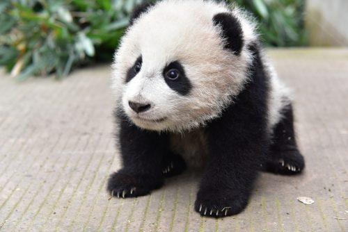 News: Yang Li – 阳 丽
