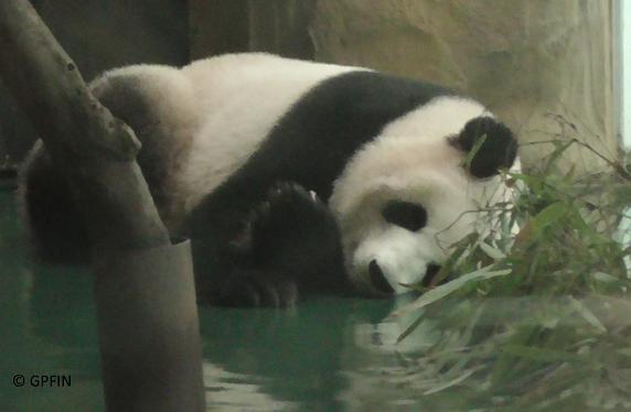 Erste Etappe der China Exkursion: Chengdu Zoo 2016