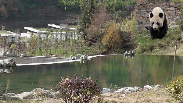 Vierte Etappe: Wolong Panda Base Gengda