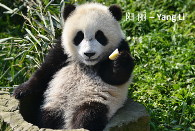 Neues: Yang Li