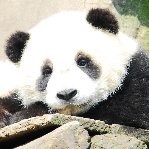 News: Zhao Yang