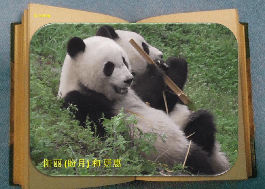 Yang Li: Aus meinem Tagebuch