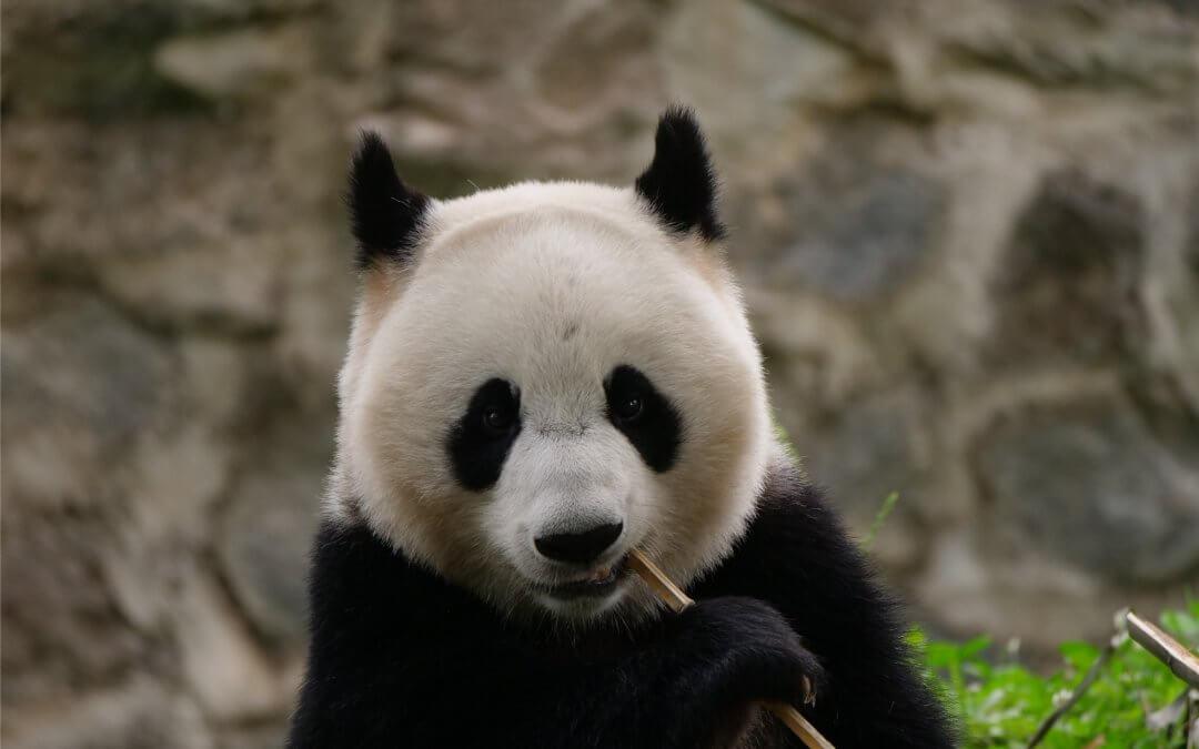Yang Li (Pan Yue): Neues